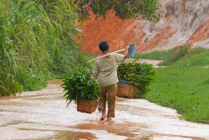 A Vietnamese farmer (woman) carrying lemongrass