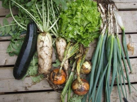 a)無農薬野菜