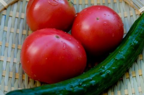 tomatokyuri