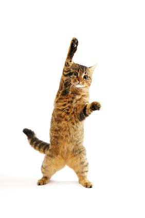 勝手に動いてしまう猫の手