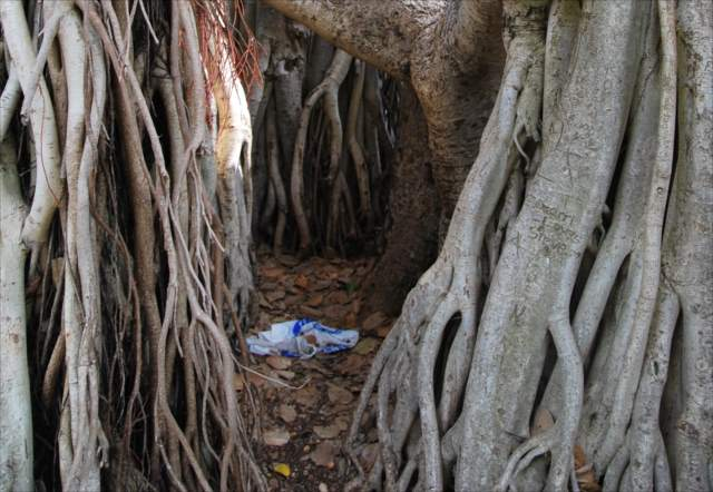木の根元にゴミ