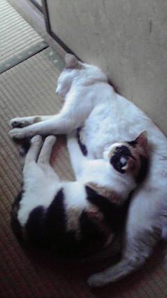 眠っている2匹
