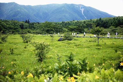 ニッコウキスゲ咲く高原