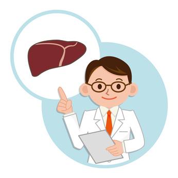 肝臓の説明をする医師