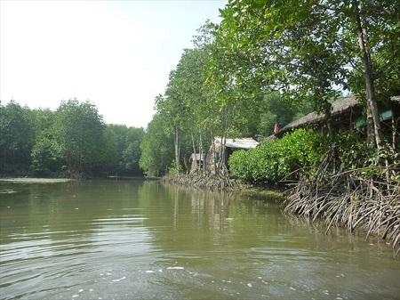 94 これが東南アジア。メコンデルタの自然を体感 (1)