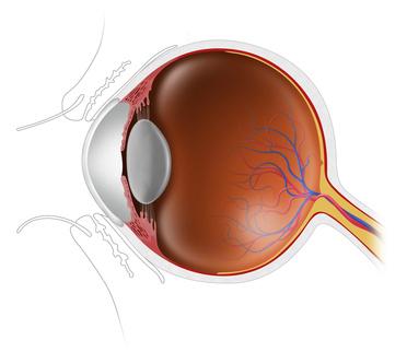目の断面と水晶体