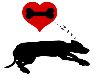 骨の夢を見る犬