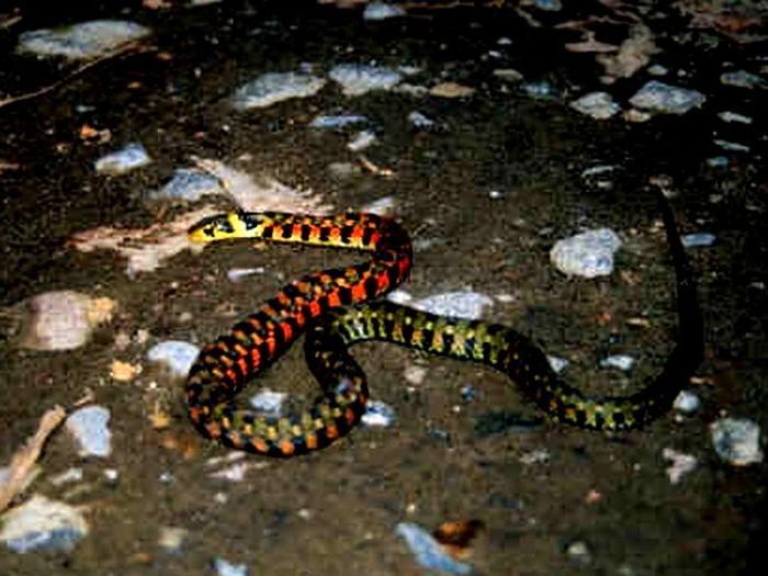 まだら模様のあるヘビ