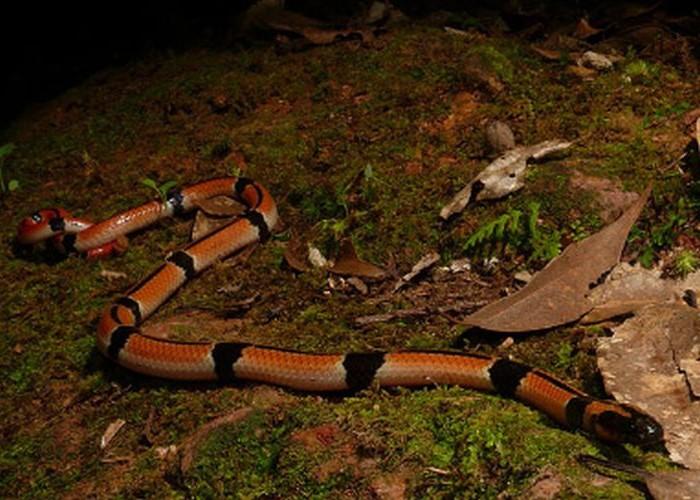 自分に巻き付くヘビ