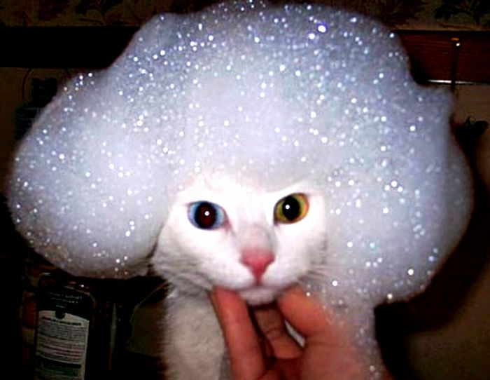 頭に泡をつけてる猫